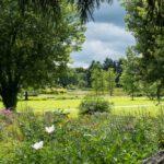 Große grüne Wiese im Loki Schmidt Garten