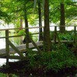 Brücke im Moorgebiet des Loki Schmidt Garten