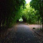 Bambuswald im Loki Schmidt Garten