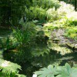 Kleiner Bach im Loki Schmidt Garten