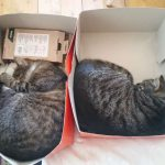 Sleeping Cats 11
