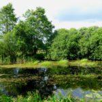Entdecke Hamburg Duvenstedter Brook 15