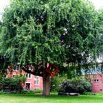 Rathaus Harburg Baum mit Würfel