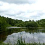 See im Naturschutzgebiet Höltigbaum
