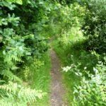Weg durch den Höltigbaum