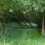 Teich nahe der Wandsequelle