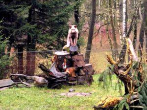 Wildpark Schwarze Berge Fuchs