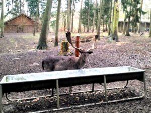 Wildpark Schwarze Berge Reh Am Futtertrog