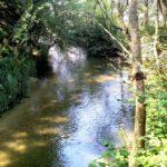 121 Fluss Am Wanderweg